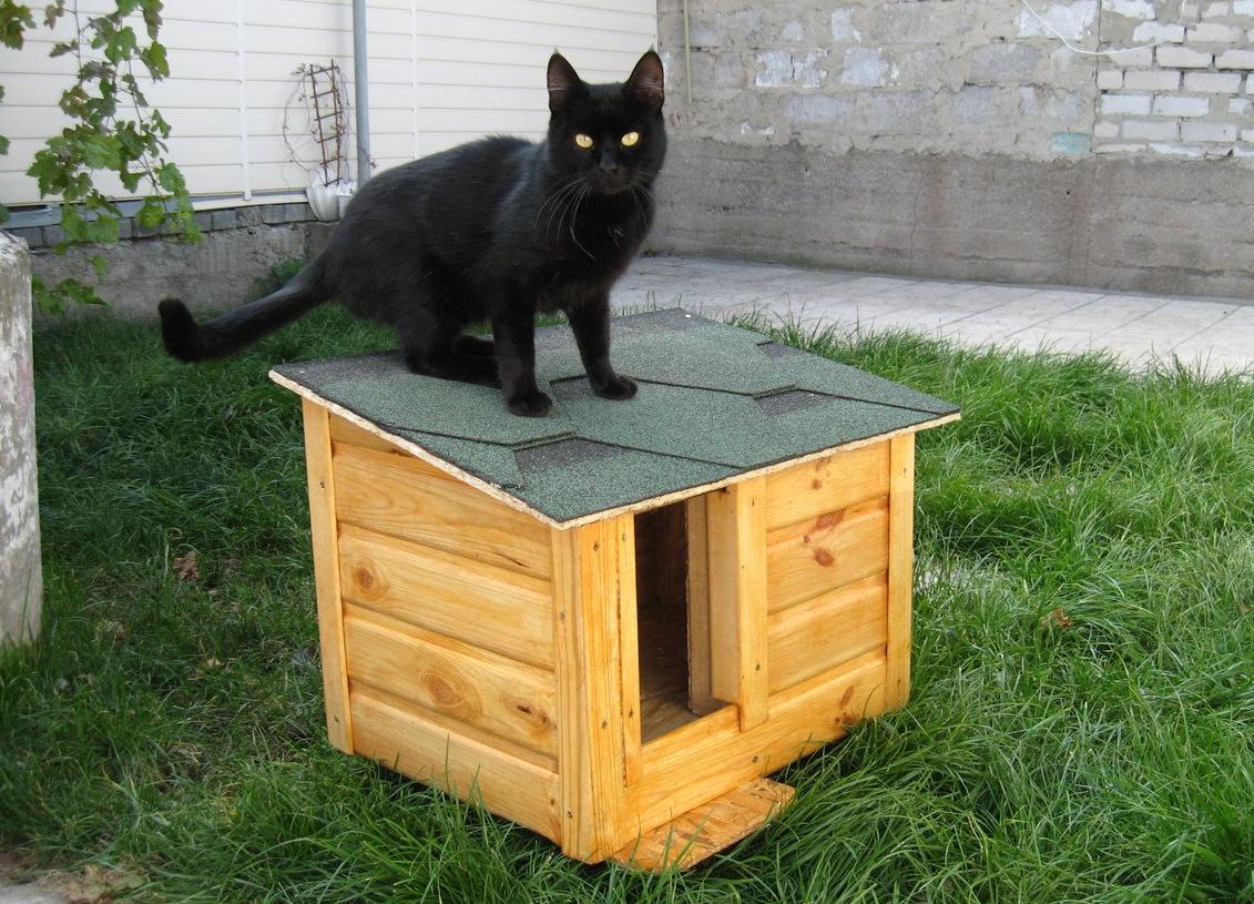 лица города дом на улице для кота картинка случай, когда
