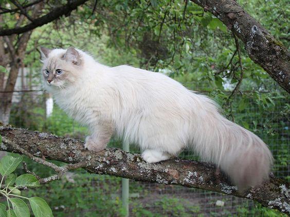 невская маскарадная на дереве