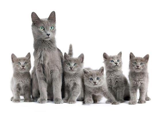 нибелунг_котята